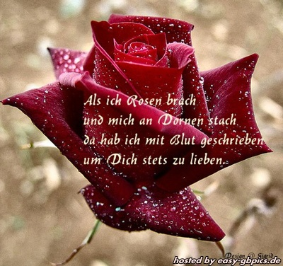 Liebe Whatapp Bilder