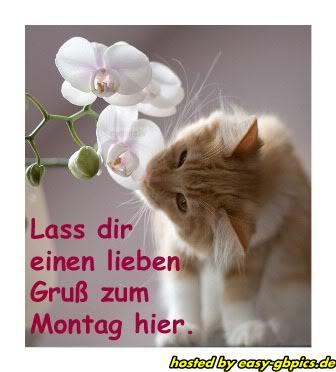 Montag Whatapp Bilder