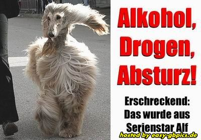 GB Bild: Alkohol & Party