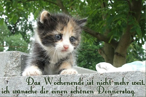 GB-Pic: Donnerstag
